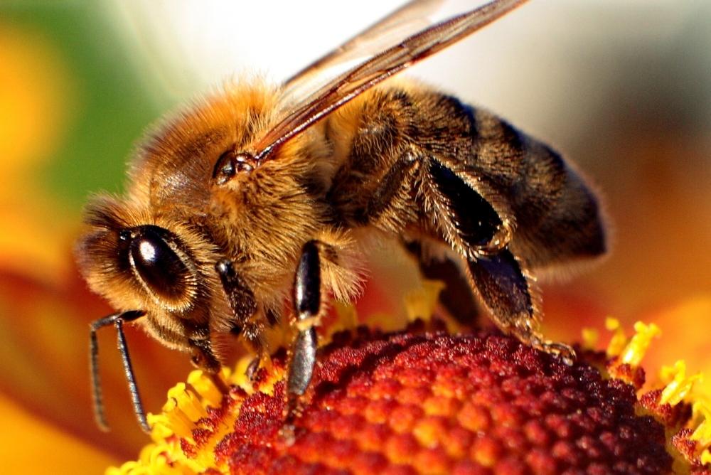 Najdi si včelaře