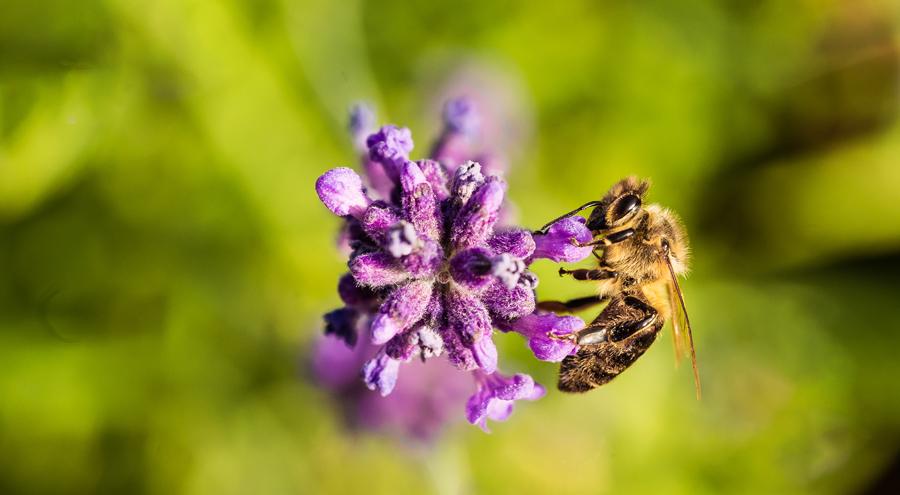 Med a jeho přínosy pro naše zdraví
